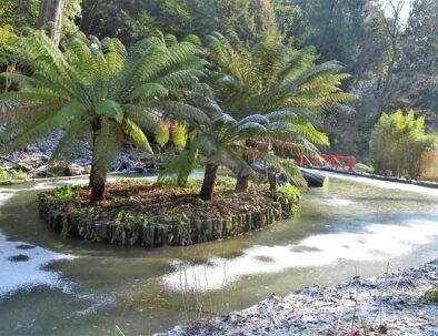 Abbotsbury Sub Tropical Garden
